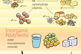 Infographics Design: Nutrients